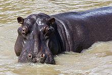 Hippo Tours Travel Malaysia