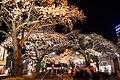 Hitachi Sakura Festival, Ibaraki 29.jpg