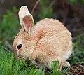 Honey bunny.jpg