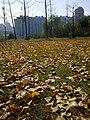 Hongshan, Wuhan, Hubei, China - panoramio (21).jpg