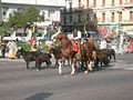 Horses in 9 de Julio.jpg