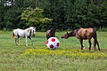 Horses with big ball.jpg