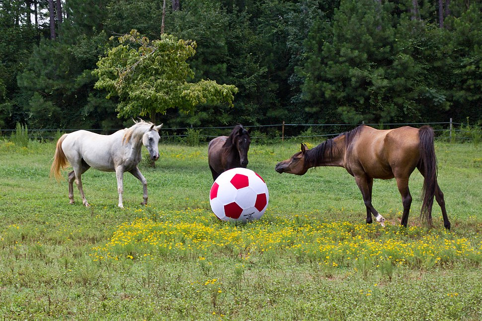 Horses with big ball