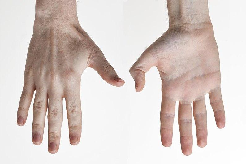 Human-Hands-Back-Front.jpg