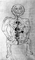 Human figure showing arteries and viscera, Persian, 18th C Wellcome M0014268.jpg