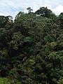 Hutan Alam Mandi Angin Minas Riau 08.jpg