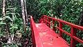 Hutan Pelawan - panoramio.jpg