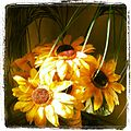 IPhoneography Sunflowers.jpg