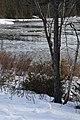 Ice in Bass Cove, Drummond Island - 49370730582.jpg