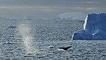 Icebergs Flandes 3.jpg