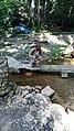 Ikogosi Warm water spring 09.jpg