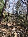 Il sentiero del Corbezzolo - panoramio.jpg