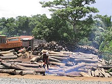 Tree trunks piled up in front of a forest background, with workers cutting them