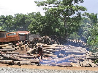 Tropical timber - Illegal logging in Madagascar. In 2009, the vast majority of the illegally obtained rosewood was exported to China.