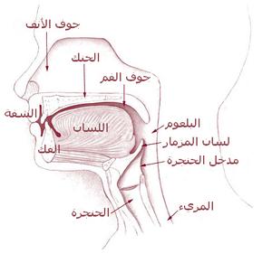 Illu01 head neck - Arabic.png