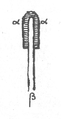 Illustration from Foucauld's Dictionnaire touareg, page 877 (a).png