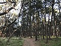 Imazu Pine Grove 8.jpg