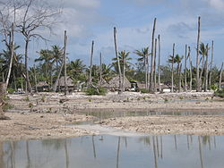 Impacts of coastal erosion and drought on coconut palms in Eita, Tarawa, Kiribati.JPG