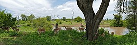 Impalas and Zebras at Duke's Waterhole (16589771331).jpg