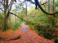 In Cairn Wood (4) - geograph.org.uk - 609959.jpg