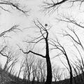 In park Cohan (1993). (17667390098).jpg