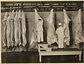 Inspection of Carcasses - NARA - 5714085 (page 1).jpg