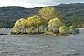 Island in Loch Lomond - geograph.org.uk - 27560.jpg