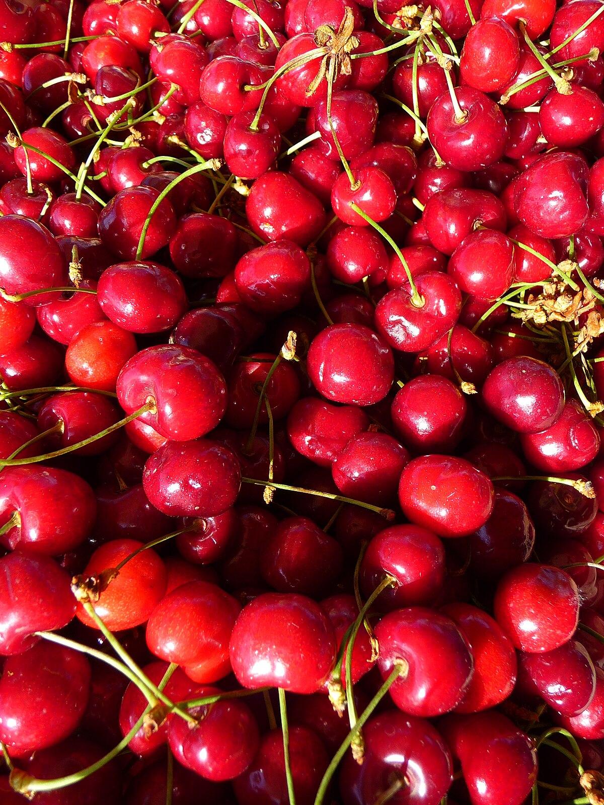 Prunus avium fruit Tree SEEDS~Mazzard Cherry~Black Cherry