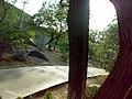 JNU Tree Road.jpg