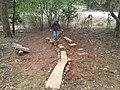 JR Balancing Stumps (7030230855).jpg