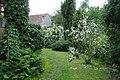 Jaśminowce w ogrodzie - panoramio.jpg