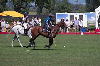 Polo - Polo player, with referee