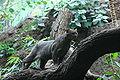 Jaguarundi Zoo Berlin.JPG