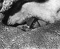 Jan Conn in Jannies Cranny, Jewel Cave - 1959.jpg