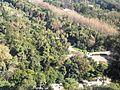 Jardin d'essai du Hamma, Alger.jpg