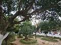 Jardin de mon village.jpg