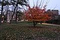 Jardin du Ranelagh, Paris 16e, automne 10.jpg