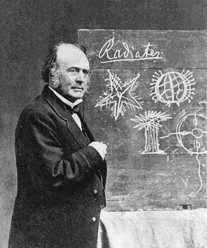 The eclipse of Darwinism - Louis Agassiz (here in 1870, with drawings of Radiata) believed in a sequence of creations in which humanity was the goal of a divine plan.