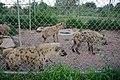 Jos zoological garden8.jpg