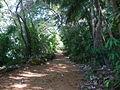 Joseph island path.jpg