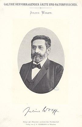 Julius Wolff