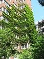 Jungley Corner (3703067110).jpg