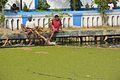 Kachuripana Arrest - Pond Shivaganga - Bhukailash Rajbati Estate - Kidderpore - Kolkata 2016-01-24 9229.JPG