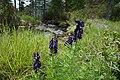 Kaponigtal im Nationalpark Hohe Tauern, Kärnten.jpg