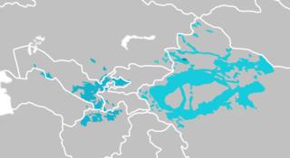 Karluk languages Sub-branch of the Turkic language family