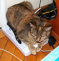 Katze auf DSL-Splitter.jpg