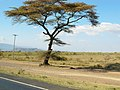 Kenya 2013. At the road Naivasha-Nairobi - panoramio (1).jpg