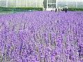 Kew Gardens (26493838639).jpg