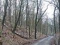 Kladow - Haveldunen (Havel Dunes) - geo.hlipp.de - 31729.jpg