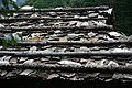 Korea-Samcheok-Gulpijip-Bark shingled house-02.jpg